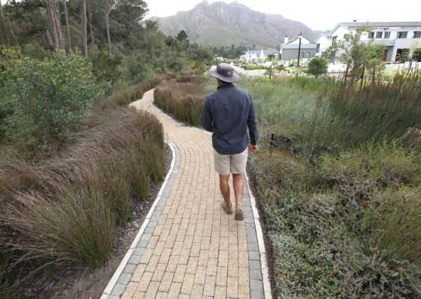 Gallery: Desirable indigenous garden - IOL Lifestyle | IOL.co.za