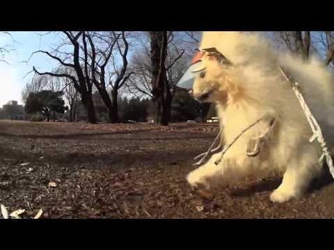 FY G4GS 愛犬と散歩ナレーション入 撮影プラクティス インストラクター解説