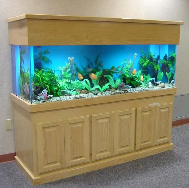 Pictures of freshwater aquiruims freshwater aquariums 5 for Big freshwater aquarium fish