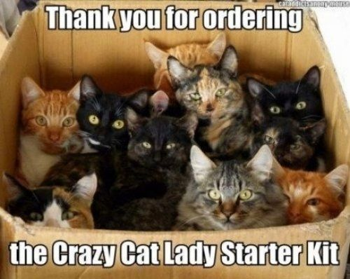 For all the cat owners, these are funny~ (I have 3 cats!)