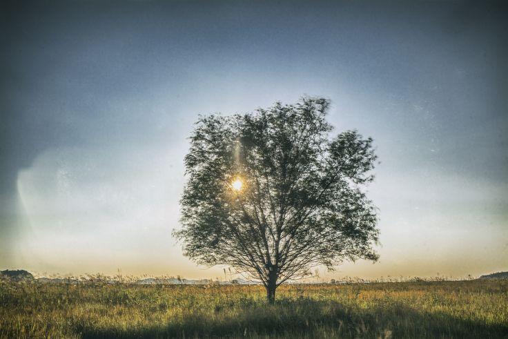 The Tree of MIND by Gakugo KYE on 500px  Instagram : gakugo