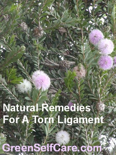 Natural Remedies For A Torn Ligament - http://greenselfcare.com/natural-remedies-for-a-torn-ligament/ - #AlternativeToConventionalTreatment, #DIYOintment, #HealATornLigament, #NaturalRemedies, #NaturalRemediesForATornLigament, #SoothingBath, #Supplements, #TornLigament - In the first half of our lives we abuse our bodies; in the second we tend to be out of shape and less able to protect them from injury, hence torn ligaments. Torn ligaments can be very painful which is why ma