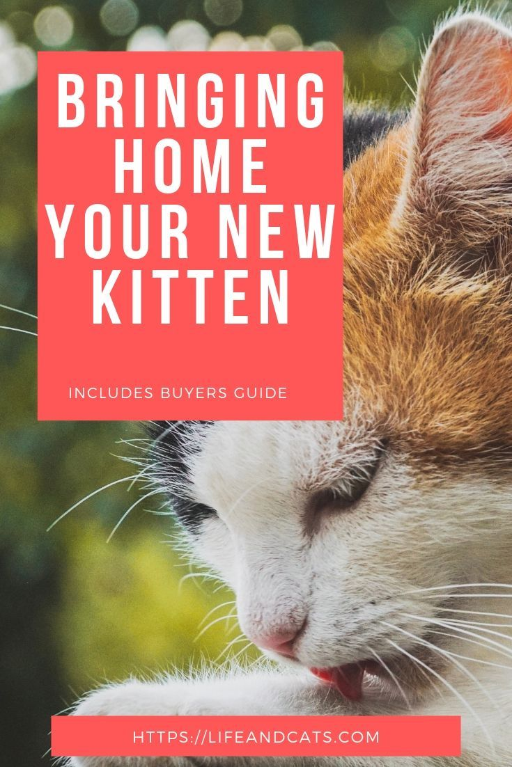 All You Need To Prepare To Bring Home A New Kitten Get Your Kitten Off To A Good Start Set Your Kitten Adoption Up Fo Getting A Kitten Kitten Adoption Kitten