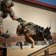 #Repost from @marines -  Let me at 'em!  A Marine with Marine Corps Forces Special Operations Command participates in an obstacle course with a MARSOC canine during a Multi-Purpose canine subject matter expert exchange conference on Camp Pendleton, California, Feb. 4, 2016. MARSOC specializes in direct action, special reconnaissance and foreign internal defense and has also been directed to conduct counter-terrorism and information operations. (U.S. Marine Corps photo by Cpl. Tyler S…