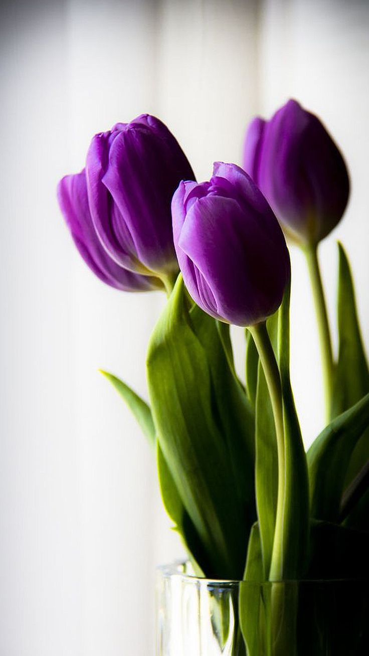 best Nature images on Pinterest Beautiful flowers Exotic