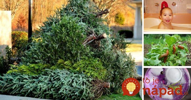 Skôr ako vianočný stromček vyhodíte, mali by ste vedieť, že vám môže ešte perfektne poslúžiť.