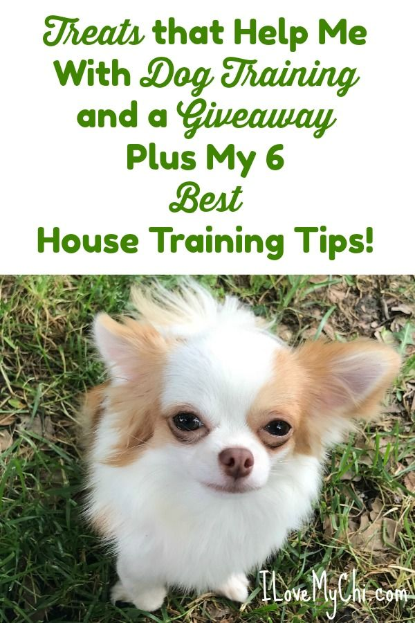 Treats That Help With Dog Training And My 6 Best House Training