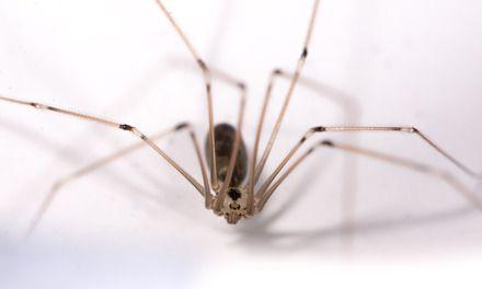 Bang voor spinnen? Zo hou je ze buiten de deur