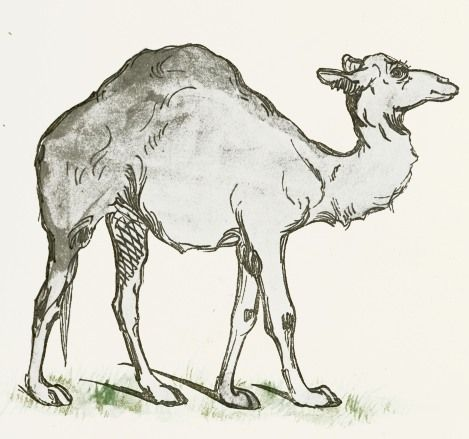 Such a sweet and charming camel drawing.