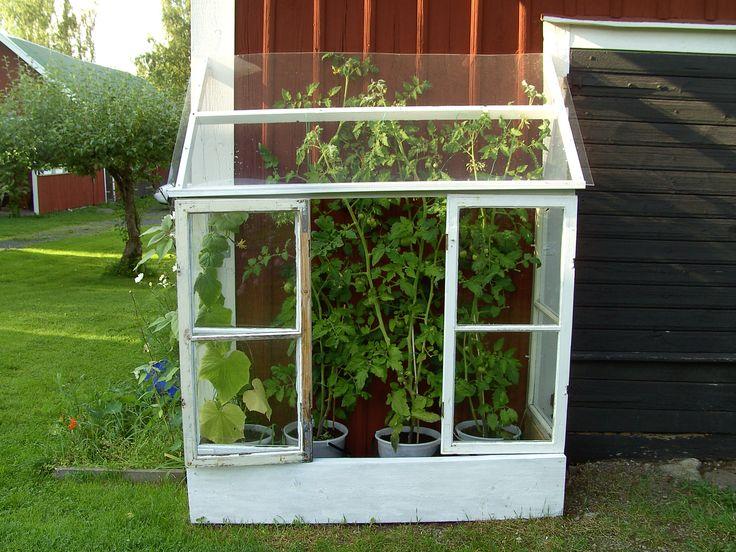 Växthus av gamla fönster - en morsdagspresent.