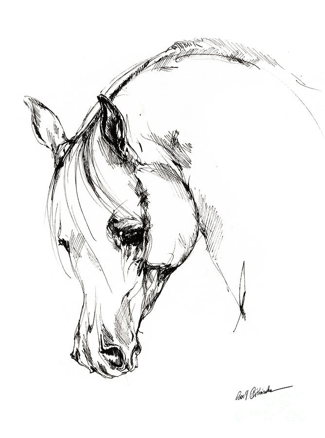 The Arabian Horse Sketch