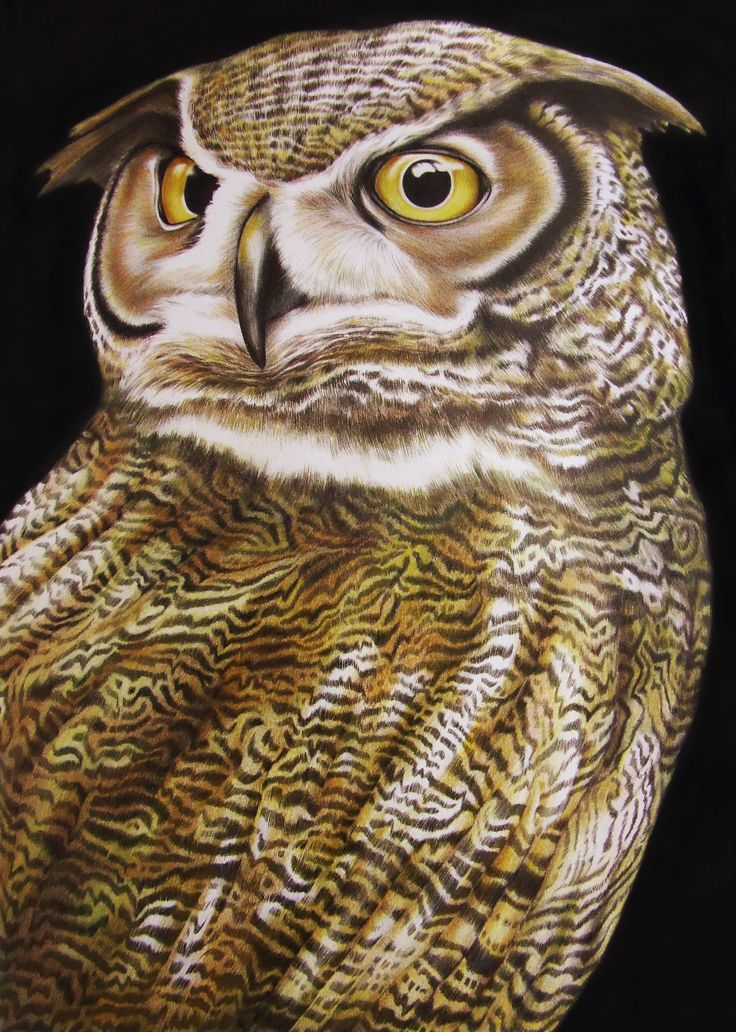 Great Horned Owl Page 16 Intricate Ink Animals In Detail A Coloring Book