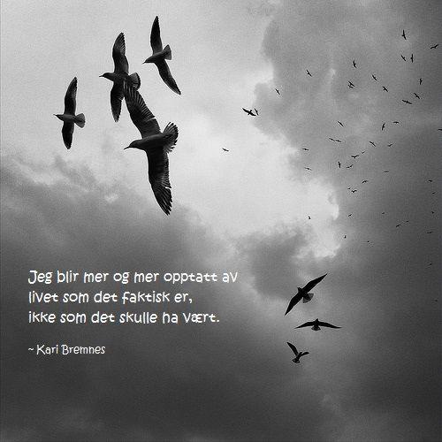 - Kari Bremnes
