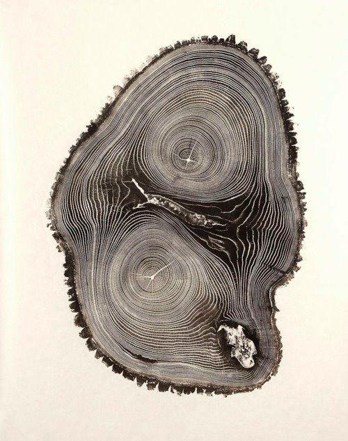 Tree Rings. Woodcut Bryan Nash Gill.