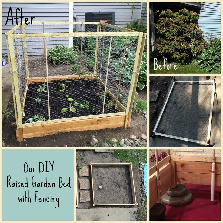 DIY Raised bed with fencing. We have a MAJOR issue with