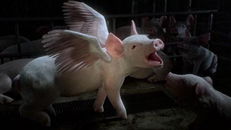 Factory Farming The Musical   http://osocio.org/message/factory_farming_the_musical/