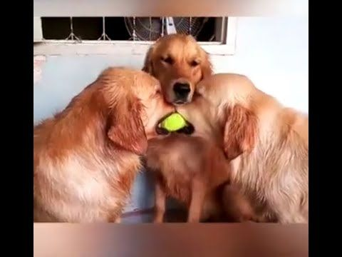 helping other animal