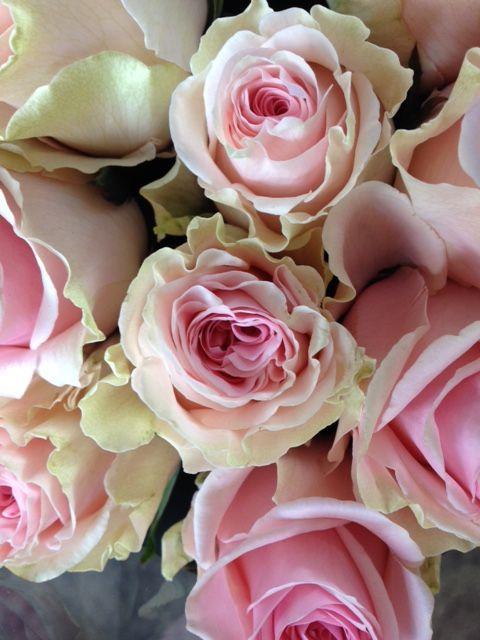 Rose 'Duchesse'...she's beautiful! Sold in bunches of 20 stems from the Flowermonger the wholesale floral home delivery service.