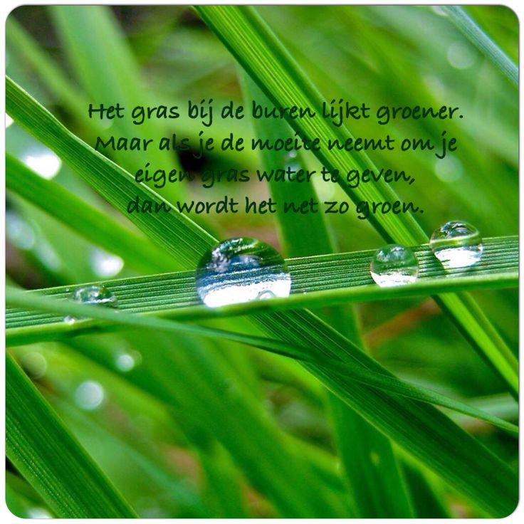 Het gras bij de buren lijkt groener. Maar als je de moeite neemt om je eigen gras water te geven dan wordt het net zo #groen