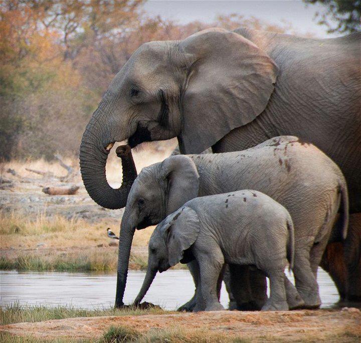 Elephants big, bigger, biggest! Elephants Pinterest