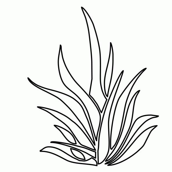 Grass Para Colorear Coloring Pages Underwater Plants Plant Drawing