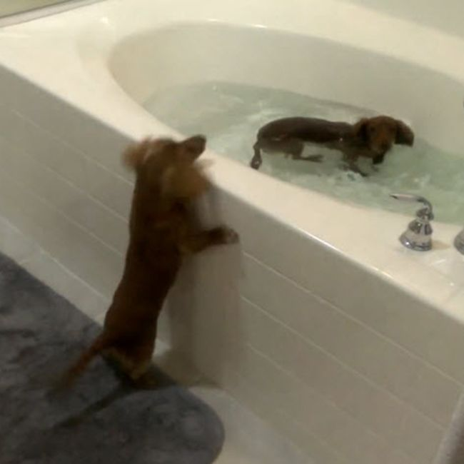 17 Best Images About Splish Splash On Pinterest