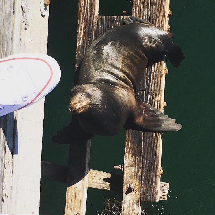 Santa Cruz CA: И все таки вернусь я к рассказу про мои впечатления Америкой! Животные кажется что они вообще не пуганые и людей не боятся не грамма)) Конечно надоедливых попрошаек чаек я не беру во внимание ведь они есть везде)) Такие знаете когда ты идешь по берегу  Океана или моря в руке с чем-то съедобным и они подлетают и стараются выхватить прям с рук ( и частенько у них это довольно не плохо получается) количество белок меня просто поразило да еще и когда в центре Манхеттена одна…