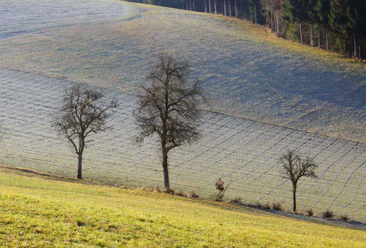 """""""Ein Winter, der ein Frühling war. Bei Bad Zell im Naturpark Mühlviertel"""" (Bild: Susanna Witte)"""