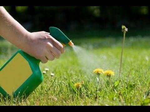 Come eliminare le erbacce dal vostro giardino - YouTube
