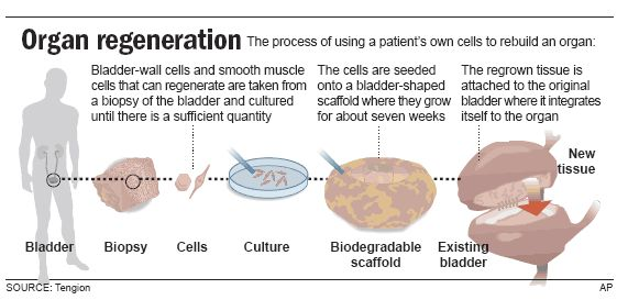 lab-grown organs are science fiction no longer | science, new you, Muscles
