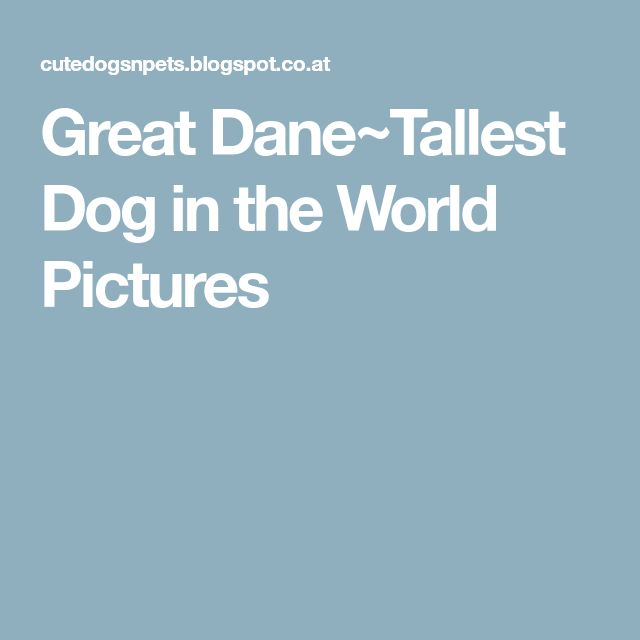 Great Dane~Tallest Dog in the World Pictures