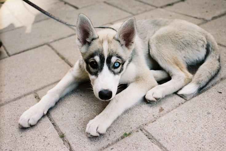 pup / erik wahlstrom