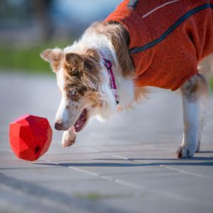 Best Dog Toys to Buy Online in Discount Price!
