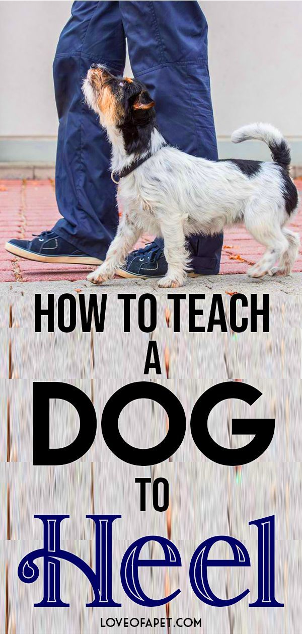 How To Teach A Dog To Heel Perfectly Dog Training Methods Dog
