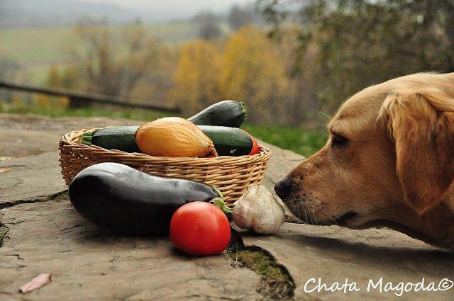 Chata Magoda: jesień