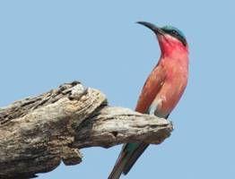 Better travel photography: birds