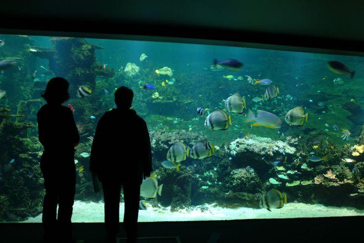 Nausicaa, Boulogne sur Mer, crédit photo: NAUSICAA