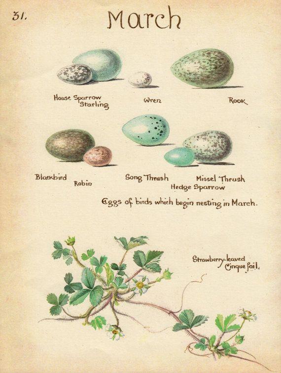 Vintage print BIRDS EGGS STRAWBERRY watercolor art bird decor month of March