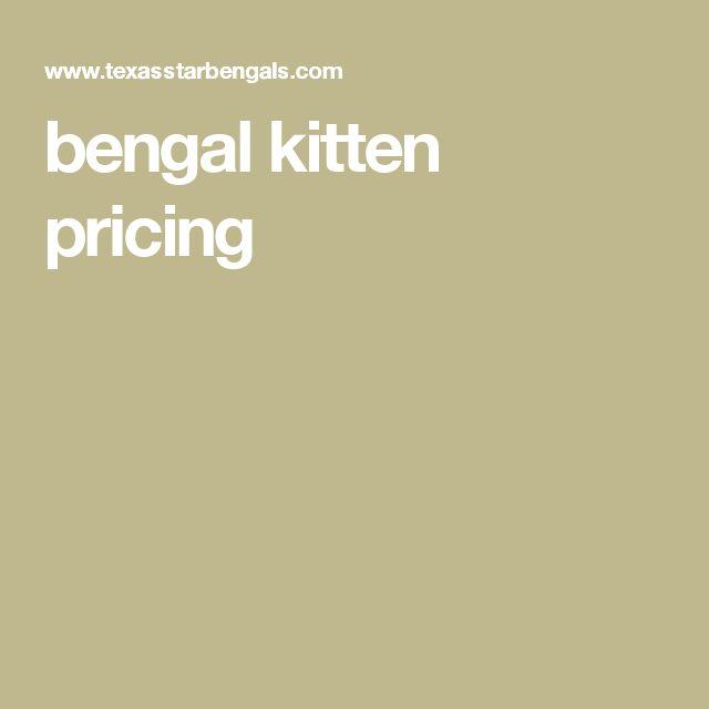 bengal kitten pricing