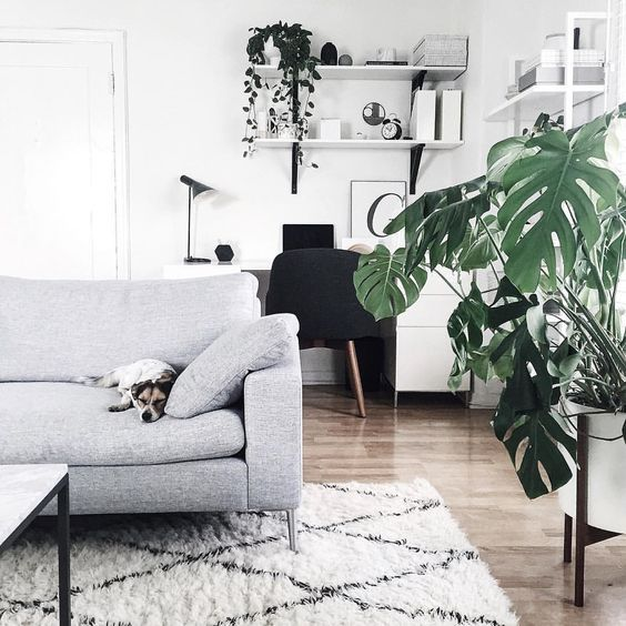 Green plants are always a good idé in the living room