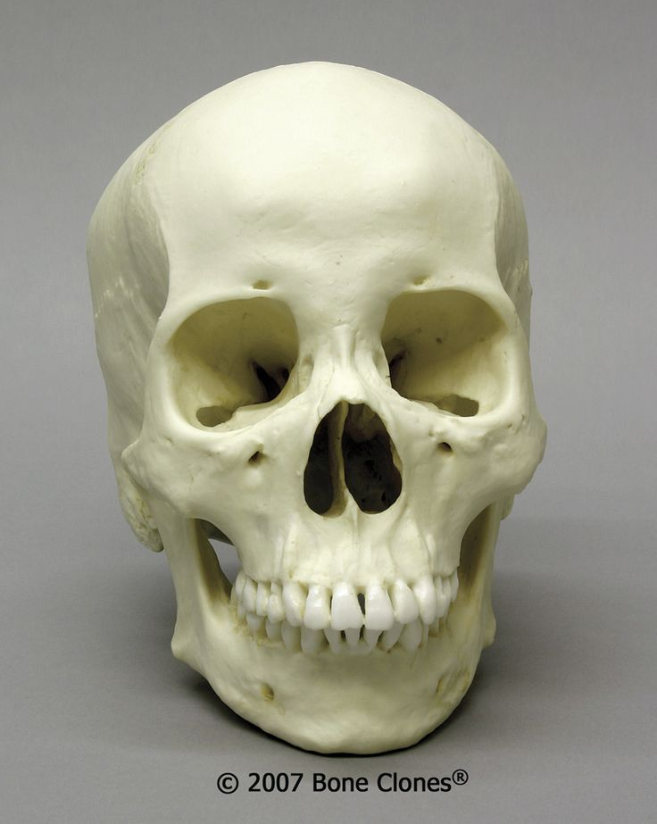 forensic anthropology topics research papers