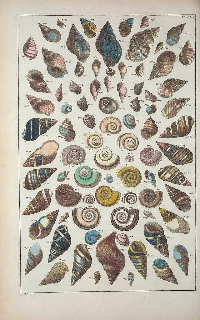 Shells and other Marine Life from Albertus Seba's Cabinet of Natural Curiosities (1734)   The Public Domain Review