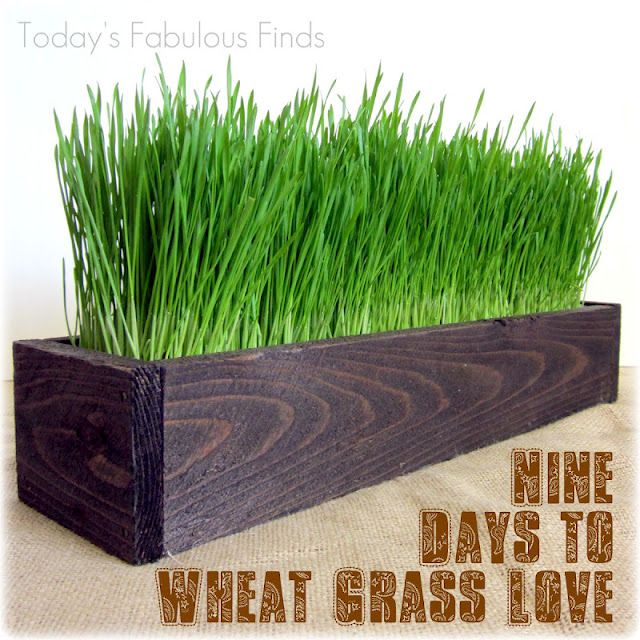 Nine Days to Wheat Grass Love!  Tutorial for making the rustic wooden box (cheap!) can also be found on her blog :)