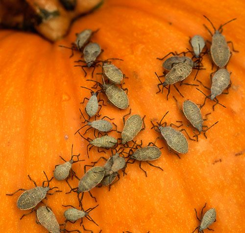 Eeeeeeeeewwww... gross for your monday. Bugs you don't know you're eating. Yuck