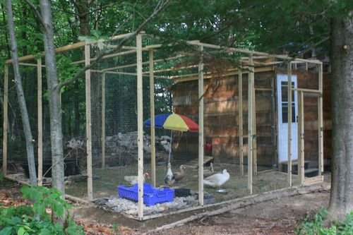 17 best images about duck pen on pinterest gardens for How to build a duck shelter