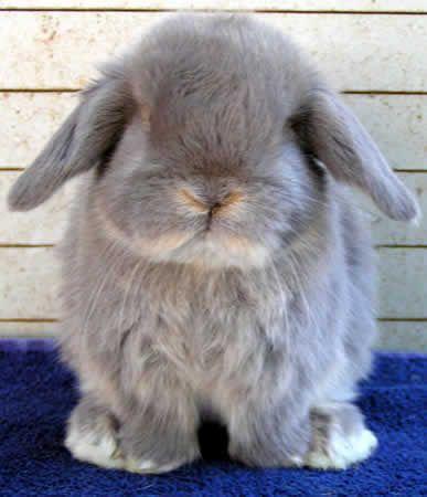 Rabbit Species | Welcome to Rabbit Hill rabbit breeds