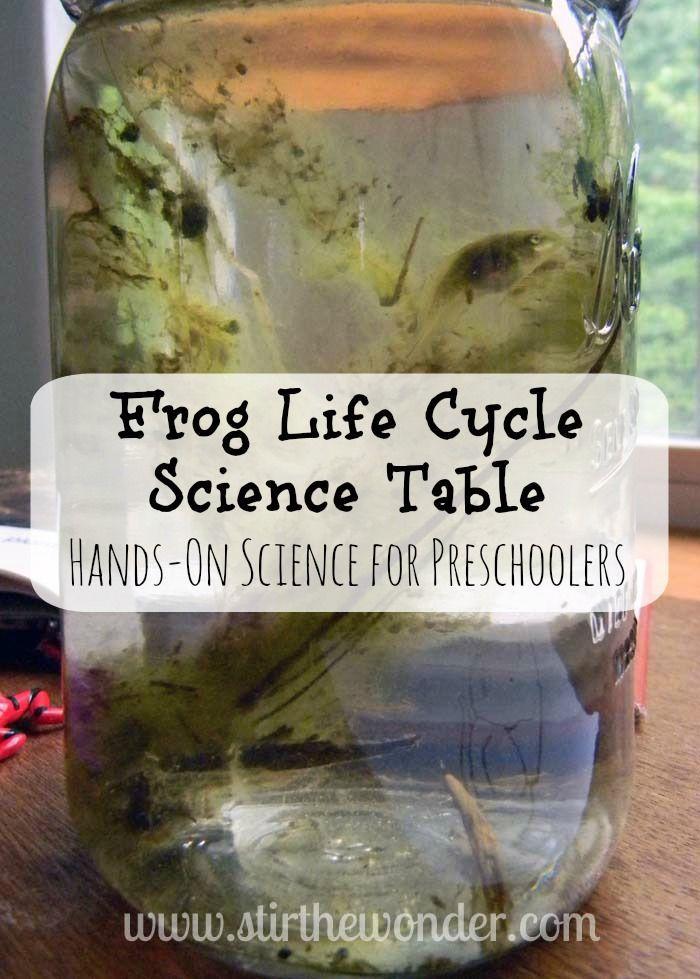 Frog Life Cycle Science Table | Stir The Wonder #handsonscience #kbn #preschool