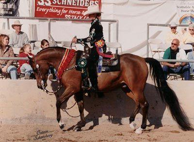 RAVED ABOUT KISSES - multi-National Top Ten/Scottsdale Champion Half-Arabian Western Pleasure Horse