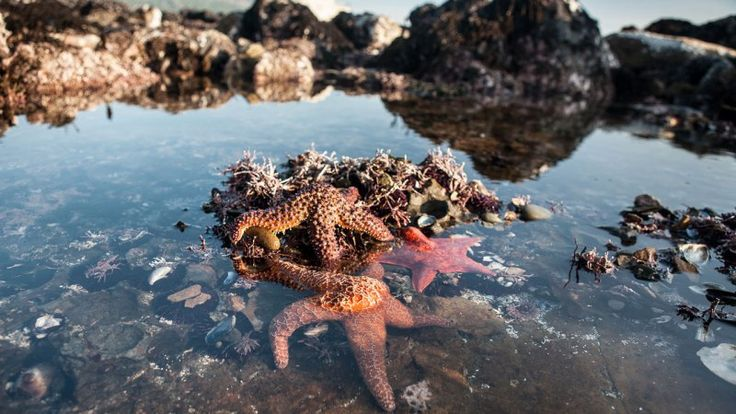 Summer in California is nearly synonymous with days at the beach. The cool NorCal waters are a great place to escape the heat and enjoy some much-needed recreation. While you're at the beach, why not satisfy your curiosity by checking out some local tide...