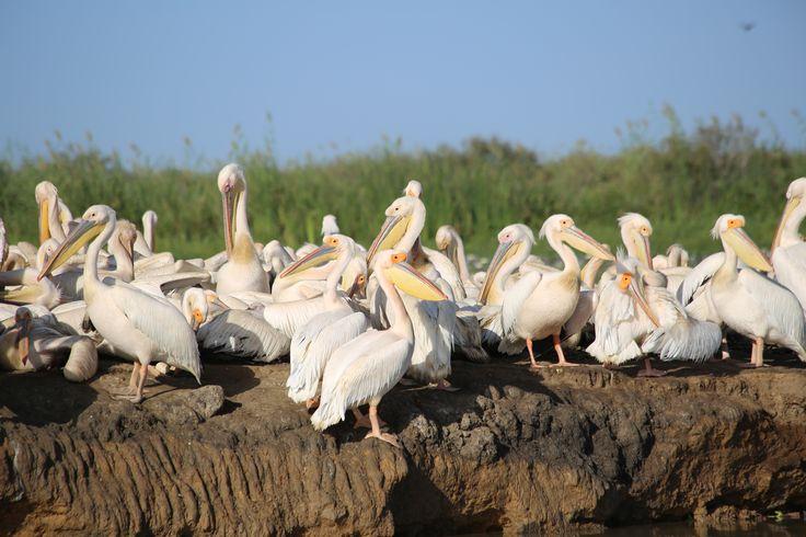 Parc ornithologique de Djoudj - Saint Louis